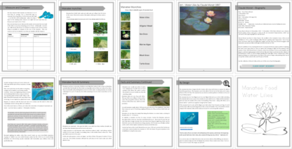 manatee study