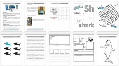 Sharks Unit Study