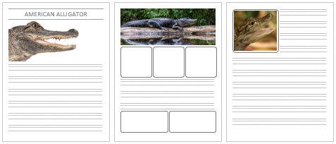American Alligator Notebooking